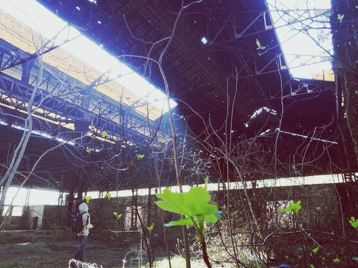 Green Abandoned Buildings Abandoned Factory Horror