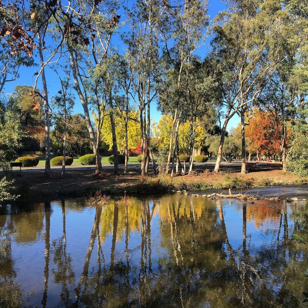 This shot really stood out to me, this was taken at my local lake park. It's just that the reflection and the beautifully colored trees awe me. Escaping Getting In Touch Water Showcase: December Adventure Nature Photography Nature Water Reflections