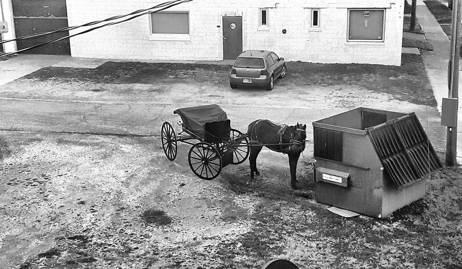 horse & buggy Horse & Buggy Amish Buggy Blackandwhite JTC  Differing Abilities Architecture First Eyeem Photo