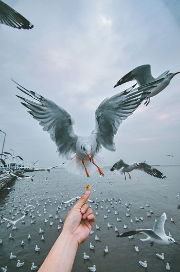 good day. Human Hand Bird Spread Wings Flying Whale Seagull Feather  Flock Of Birds Sky Animal Body Part