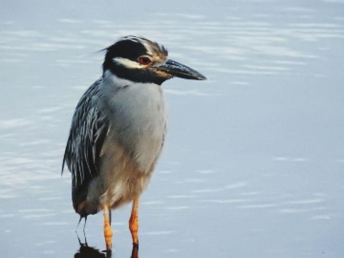 waterbird Bird