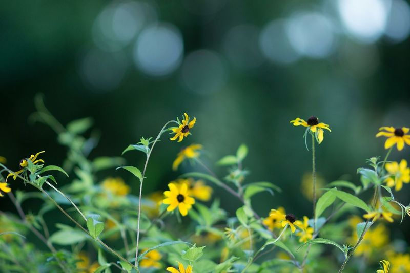 dancing rays of light Flowers Landscape Pretty