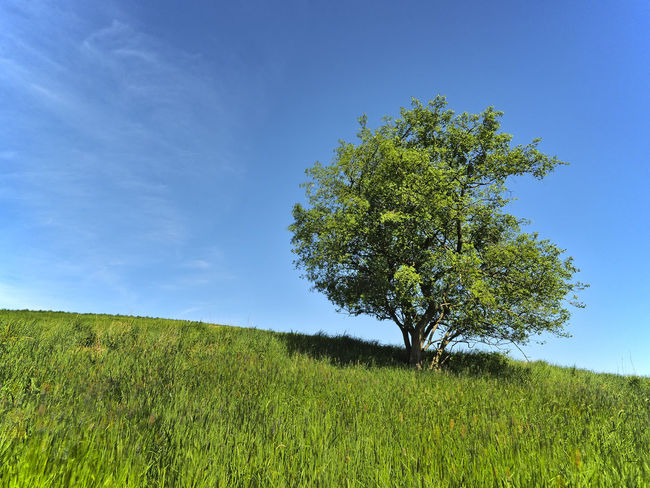 Barnim Beauty In Nature Blue Day Environment Field Grass Green Color Growth Horizon Over Land Land Landscape Nature No People Outdoors Plant Scenics - Nature Sky Tranquil Scene Tranquility Tree