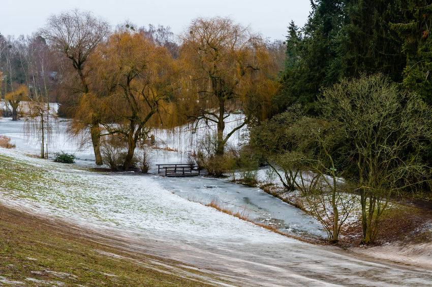 Berlin Cold Days Cold Temperature Day Frozen Lake Frozen Nature Nature Outdoors Snow Tree Winter Zehlendorf
