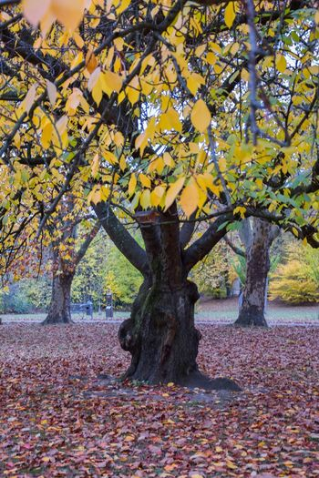 Tree Plant Autumn Beauty In Nature Leaf Nature No People Outdoors Park