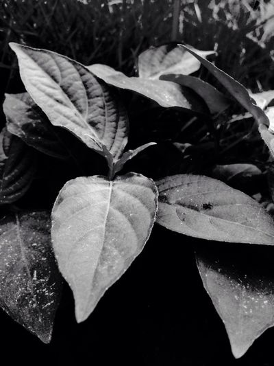 LEAVES EyeEm Best Shots Eyeem Philippines EyeEmCDO Faces Of EyeEm Blackandwhitephotography MJBRPhotography