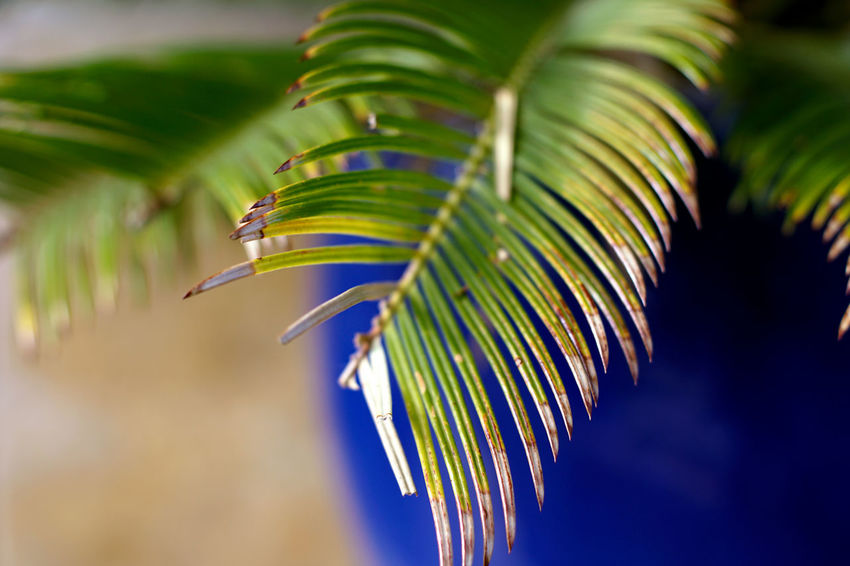 Leaf Growth Green Color Plant Part Plant Palm Tree Nature Close-up Focus On Foreground Tree Beauty In Nature No People Palm Leaf Day Tropical Climate Selective Focus Outdoors Frond Leaves Freshness