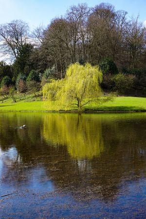 Perspectives On Nature Reflection Lake Water Tree Tranquil Scene Nature Beauty In Nature Tranquility Scenics Day Green Color Outdoors Waterfront Animals In The Wild Grass No People Animal Themes Travel Destinations Bird Sky