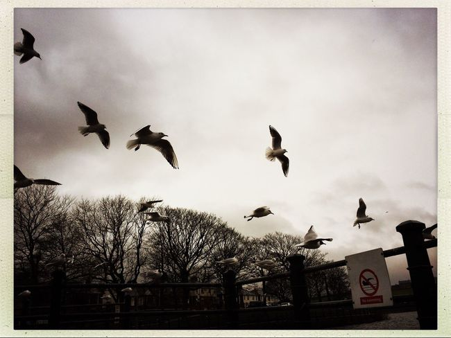 Monochrome Photography IPhoneography Flying Bird Animal Themes Animals In The Wild Sky Building Exterior No People Spread Wings Built Structure Tree Outdoors Day City Low Angle View Motion Nature Flock Of Birds Architecture