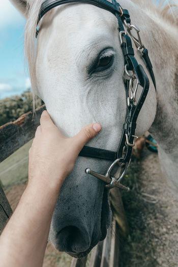 Close-up of man riding horse