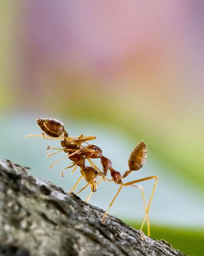 The ant colony - amazing macro photo series