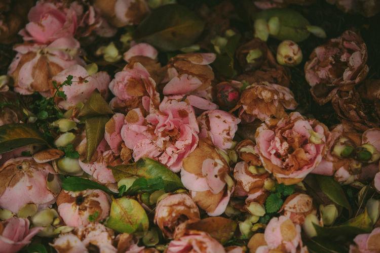 Full frame shot of rose bouquet