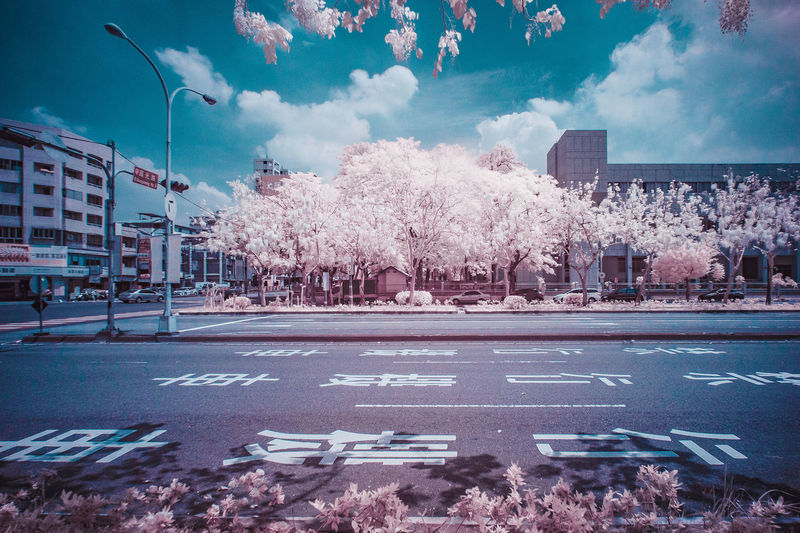 City Tree Snow Cold Temperature Winter Sky Architecture Building Exterior