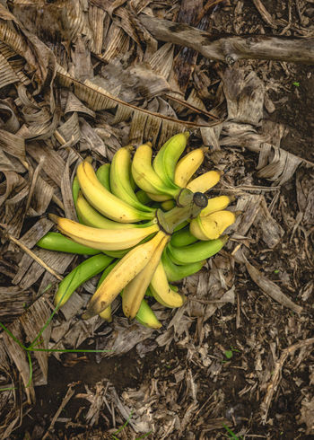 Paint The Town Yellow Banana Close-up Day Food Food And Drink Freshness Green Color Healthy Eating High Angle View No People Outdoors Vegetable Yellow