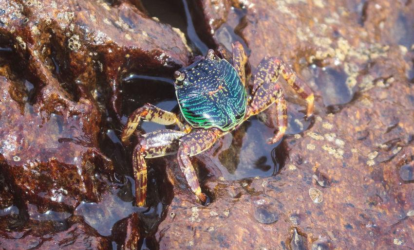 sea crab macro