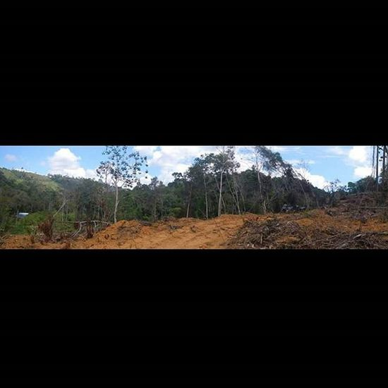 "This portion of land was taken without permission by a Palm Oil Company. My friends on the ground are currently fighting a legal battle to proove what is already clearly obvious by these photos. Unfortunately it takes time and money. And sadly will most likely be dismissed allowing the Palm Oil Company yet another ""win""... But they will keep fighting regardless! INDONESIA Borneo Kalimantan Westkalimantan Dayak Tembak Village Rainforest Saynotopalmoil Savetheorangutan Palmoil Destruction Environment Deforestation Ecowarriorsrise Savetherainforests Riseoftheecowarriors Orangutan @ecowarriorsrise"