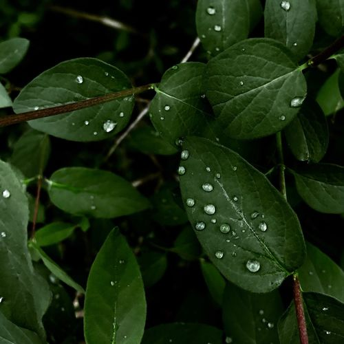 Dew on Leafs Beauty In Nature Close-up Day Drop Fragility Freshness Green Color Growth Leaf Nature No People Outdoors Plant RainDrop Water Wet