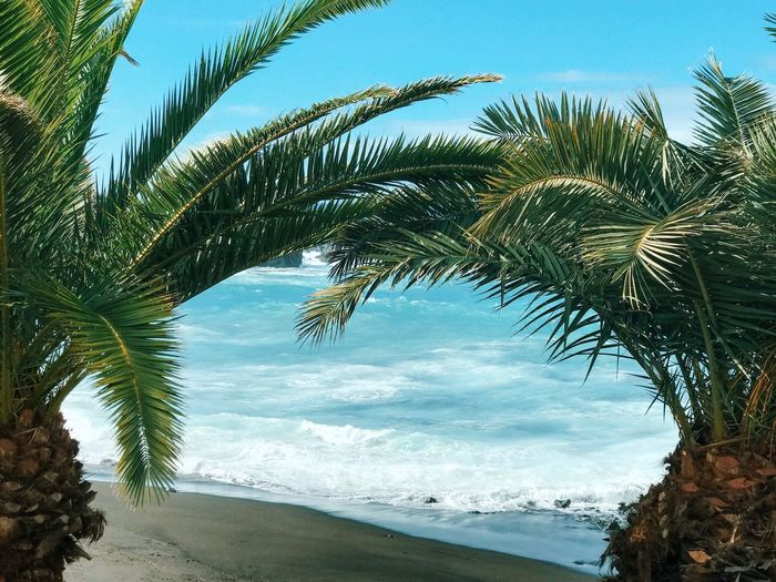Tree Plant Water Sky Beauty In Nature Sea Beach Tranquility Nature Land Tranquil Scene No People Horizon Over Water Tropical Climate Cloud - Sky Growth Scenics - Nature Day Palm Tree Outdoors