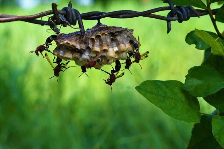 wasps on