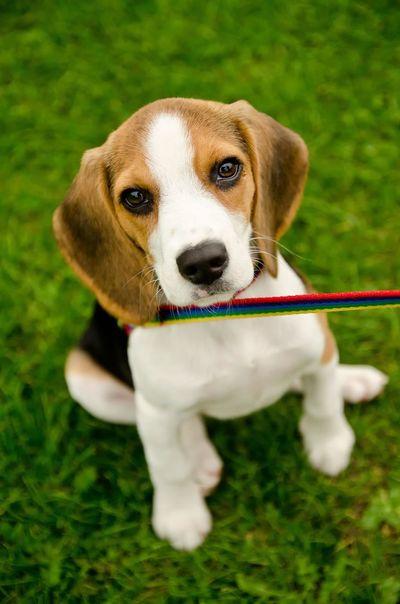 Molly, Beagle pup EyeEm Masterclass EyeEm Nature Lover Dog Cute Dog