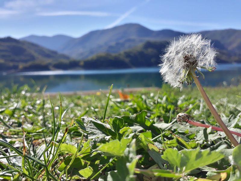 Fiori Montagne Natura Borgo San Pietro Dente Di Leone Lago Lago Del Salto Verde
