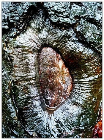 Tree Porn EyeEm Best Shots - Nature For You ;-) Philosophenwald