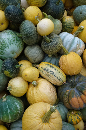 Pile of pumpkins with different colors and shapes at harvest time.