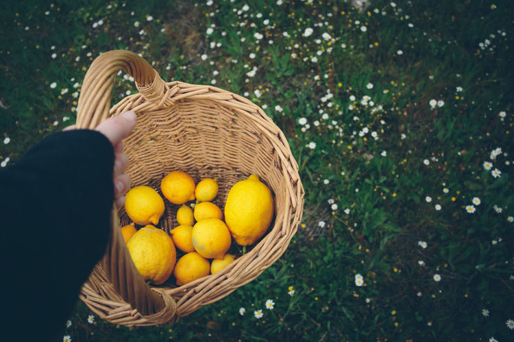 Cropped Image Of Hand Holding Wicker Basket With Lemons
