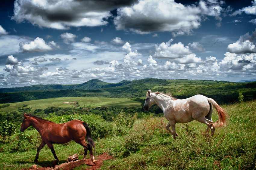 Two Horses White Horse Animal Themes Brown Horse Cloud - Sky Field Horse Landscape Mountain Two Horses, Two Riders