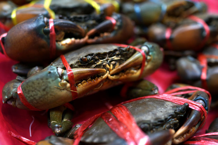 Fresh raw sea crab premium grade display for sale at seafood market. Food Freshness Seafood Market Healthy Eating Close-up Retail  Wellbeing For Sale No People Selective Focus Animal Still Life Crustacean Crab Indoors  Day Business Market Stall Restaurant Sea Life Raw Food Claw