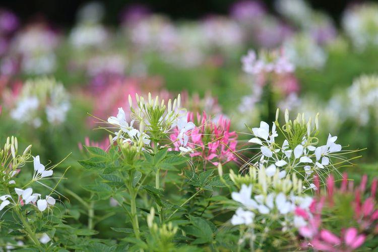 賑やかな花♪(*^^)/