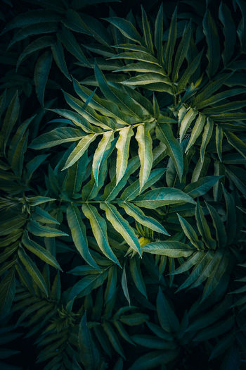 Green plant leaves in the nature, green background