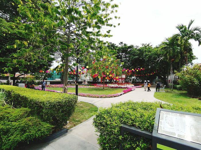 Tree Water Park