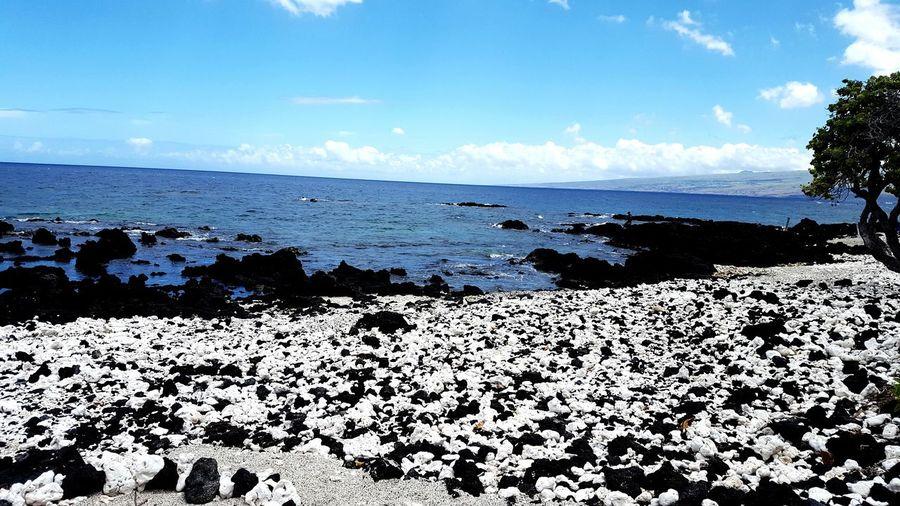 Mauna Lani Beach Park Lava Rock Coral Hawaii