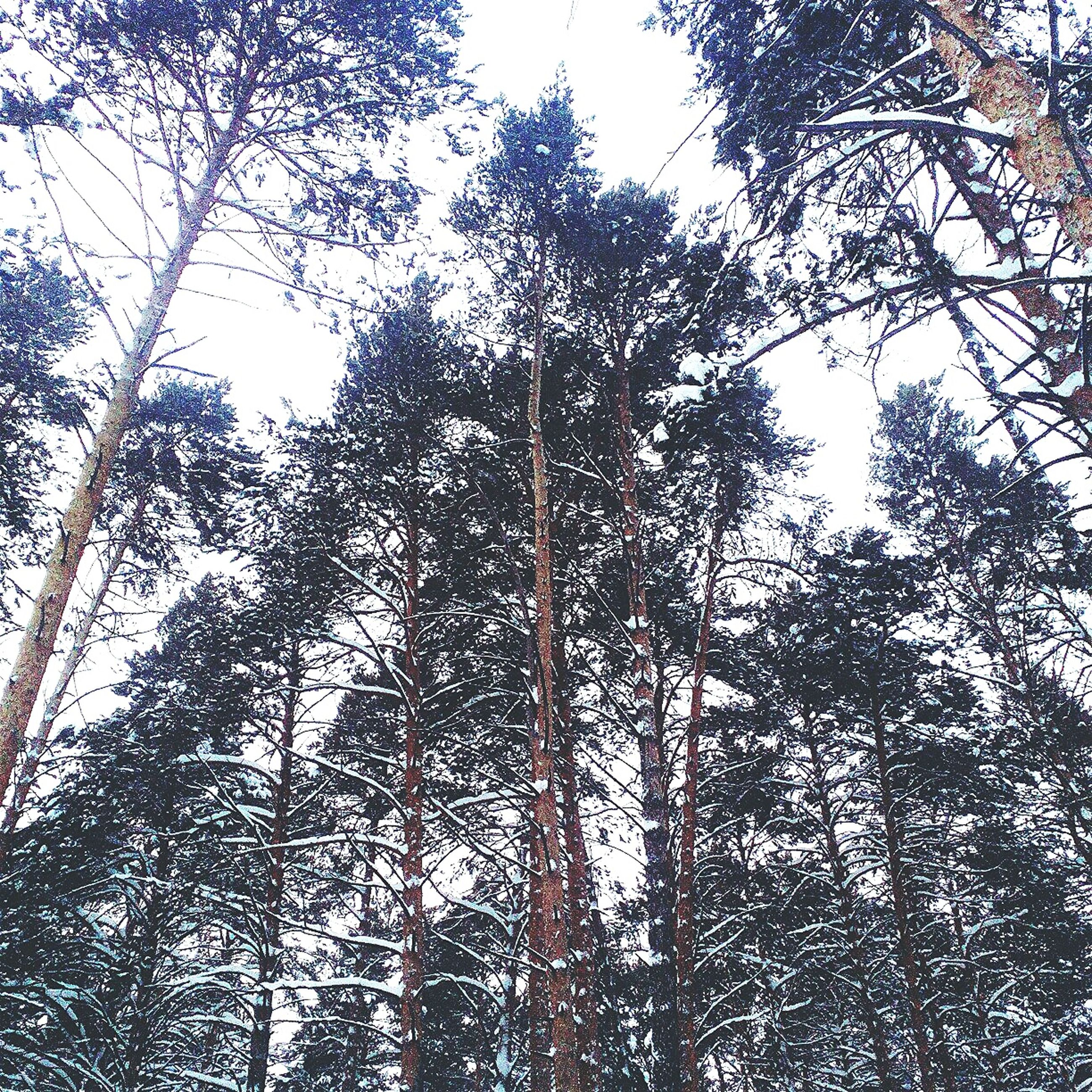tree, low angle view, forest, tree trunk, growth, nature, no people, day, outdoors, branch, beauty in nature, sky