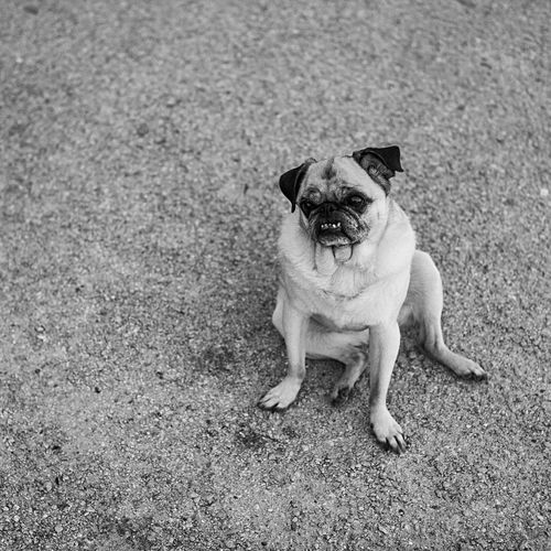 EyeEm Selects What is this world? Dog Sitting Pets Blackandwhite Day Black And White Streetphotography Street Photography Streetphoto_bw Dogs Dogs Of EyeEm Dogslife Summer City Life Breathing Space