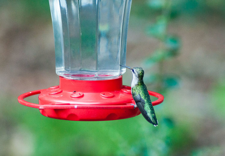 Hummingbird On Bird Feeder Over Field