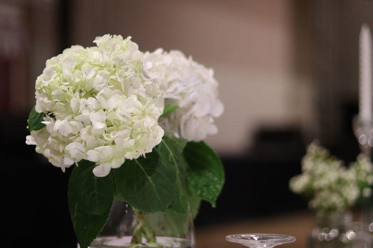 Close-up of white rose flowers in vase