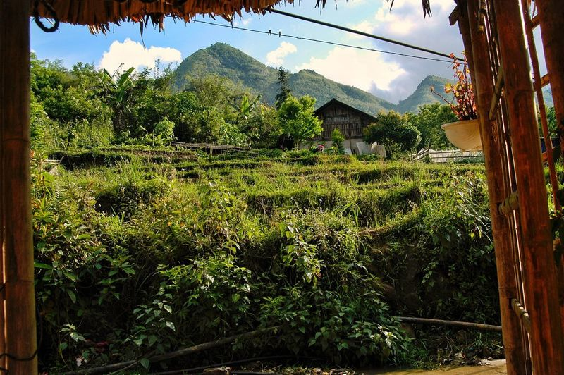 Vietnam SaPa Plant Growth Sky Nature Tree Day Green Color No People Low Angle View Sunlight Built Structure Beauty In Nature Architecture Outdoors Tranquility Mountain Building Exterior Agriculture Land Scenics - Nature