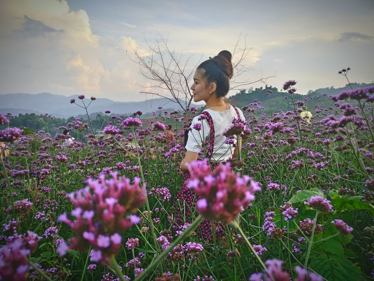 Rear View Of Young Woman Standing Amidst Pink Flowers On Field