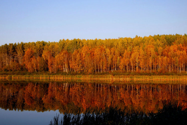 43 Golden Moments Alberta Autumn Calm Canada Chickakoo Lake Clear Sky Colours Of Nature Fall Forest Lake Nature No People Orange Color Outdoors Reflection Standing Water Tranquility Trees Water
