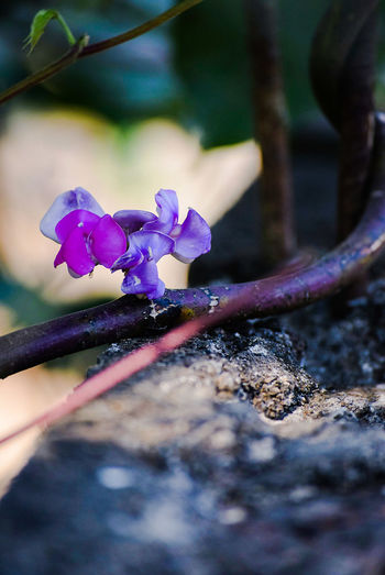 Close-up Purple No People Outdoors Nature Day Green Color Leaf Growth Blossom Flower Pink Color Flower Head Nature Beauty In Nature