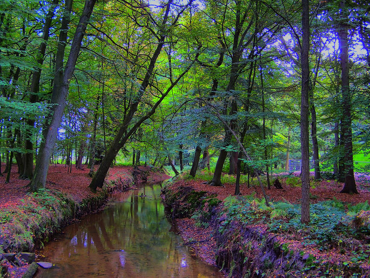 Autumn HDR Beauty In Nature Forest Landscape Outdoors