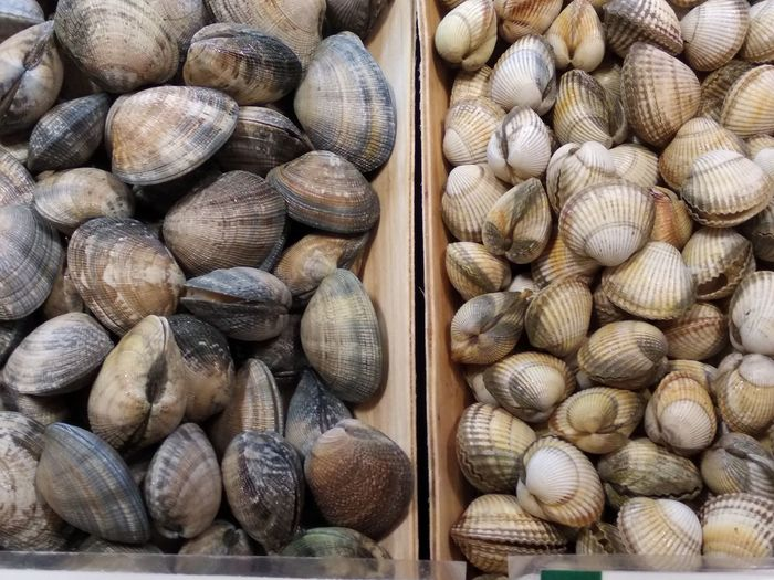 High angle view of clams for sale at fish market