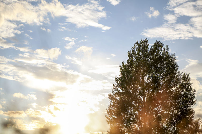 Beauty In Nature Bright Cloud Cloud - Sky Cloudscape Day Growth Idyllic Lens Flare Low Angle View Majestic Nature Non-urban Scene Orange Color Outdoors Outline Scenics Sky Sun Sunbeam Sunlight Sunset Tranquil Scene Tranquility Tree