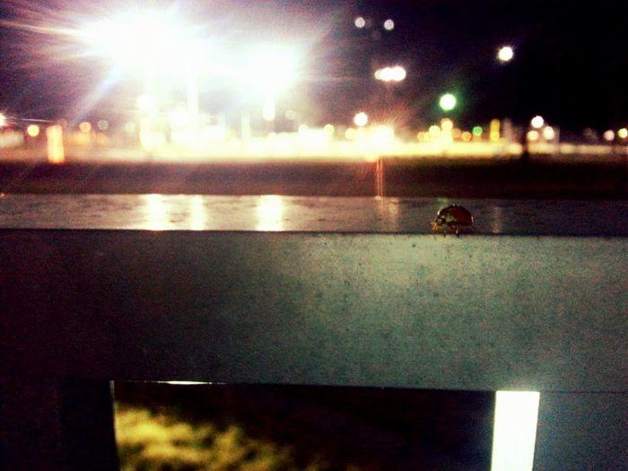 Summer bug in fall. Enjoying Life
