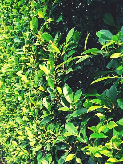 High angle view of green leaves
