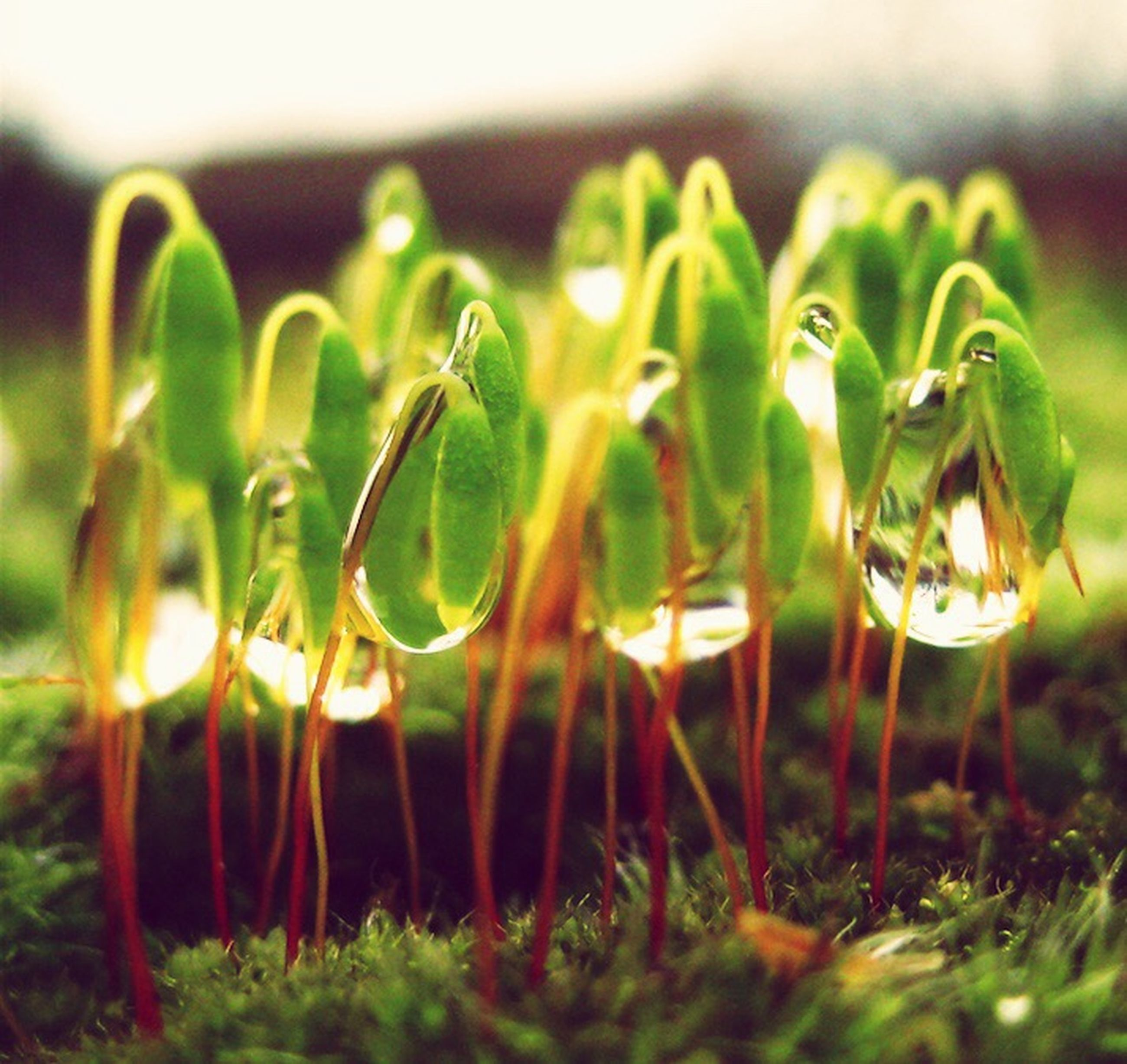 growth, focus on foreground, plant, close-up, green color, field, selective focus, nature, grass, agriculture, freshness, no people, beauty in nature, growing, tranquility, farm, stem, day, rural scene, crop