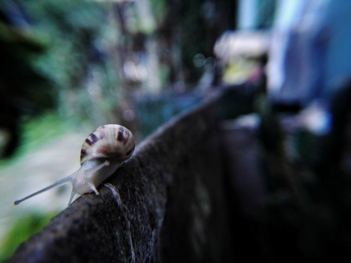Snail One Animal Animal Wildlife Nature Day Fragility Macro
