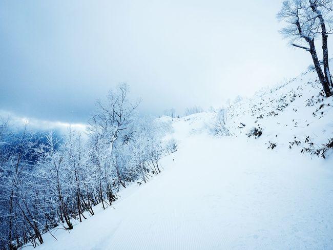 Snow Winter Cold Temperature Weather Nature White Color Beauty In Nature Tranquility Frozen Landscape No People Hokkaido Winter Skiing Snowboarding Tomamu Hoshinoya tTranquil ScenedDayoOutdoorstTreebBare TreesSkyeExtreme WeathersSnowdrift